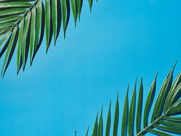 装飾的な植物と製品のプレゼンテーションのための青い背景