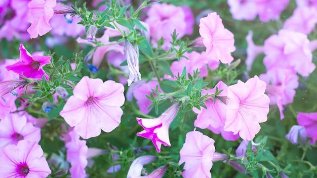 Blue bell flower as natur background
