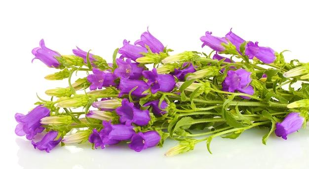 白地に青い鈴の花 Premium写真