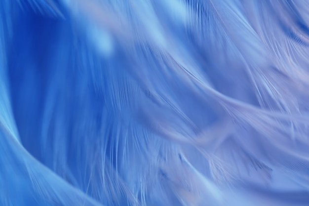 Blue bird chickens feather texture for background, fantasy, abstract