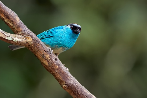 Blue bird perched on a tree branch