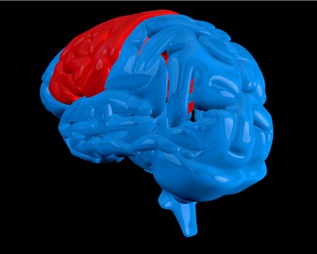 Blue brain with highlighted cerebrum