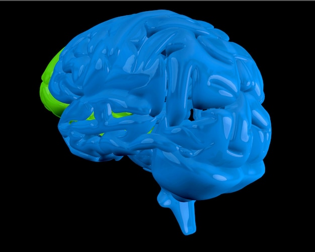Blue brain with highlighted frontal lobe
