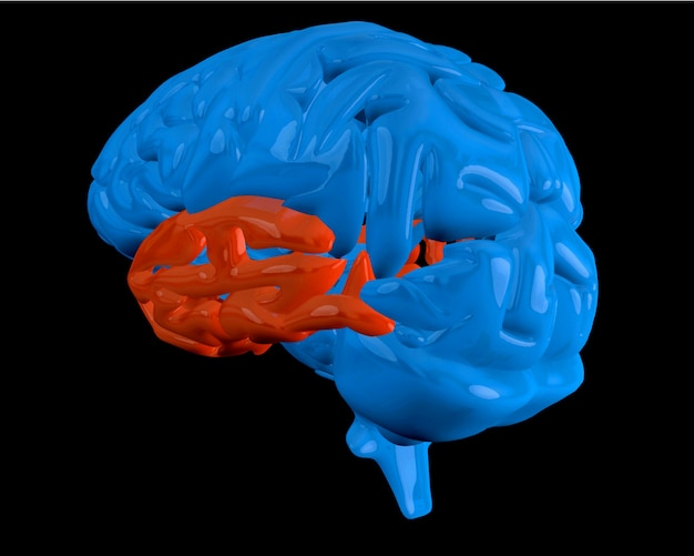 Blue brain with highlighted temporal lobe