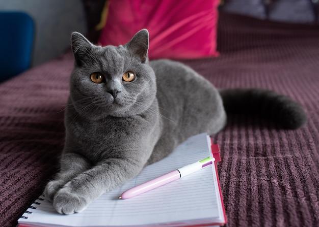 Голубая британская короткошерстная кошка лежит на кровати с блокнотом и очками