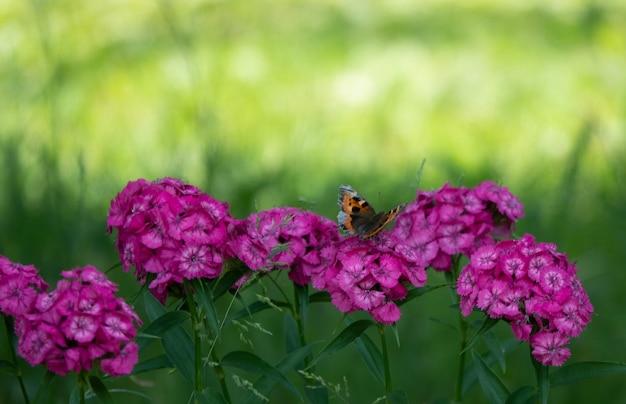 Голубые бабочки летают в цветах космоса на фоне сумеречного неба