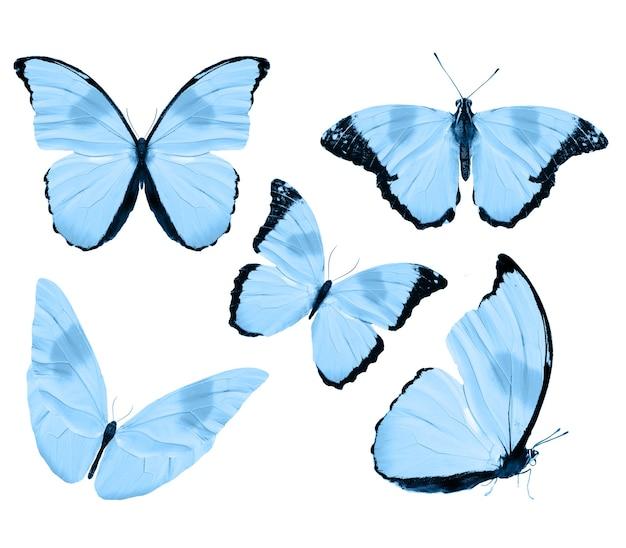 Голубые бабочки, изолированные на белом фоне. тропические бабочки. насекомые для дизайна. акварельные краски