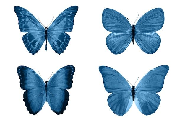 白い背景で隔離の青い蝶。熱帯の蛾。デザインのための昆虫。水彩絵の具