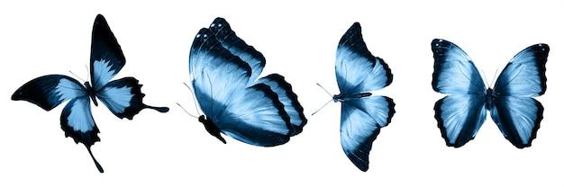 Голубые бабочки, изолированные на белом фоне. тропические бабочки