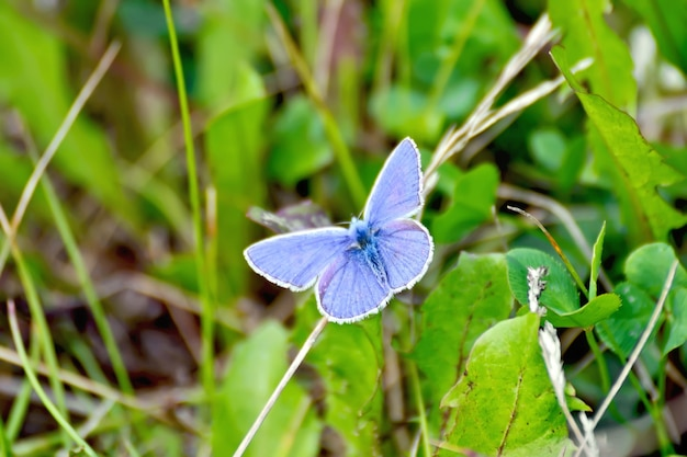 Blue butterfly on a background of grass and earth