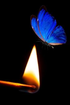 파란 나비가 불에 날아갑니다. 검정색 배경에 파란색 나방과 불타는 성냥. 고품질 사진