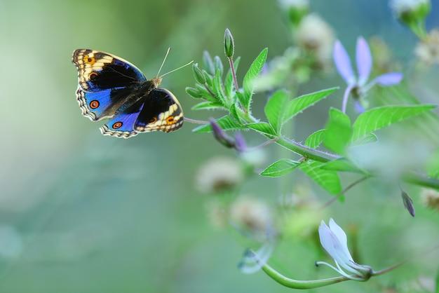 자연 배경으로 꽃에 푸른 나비
