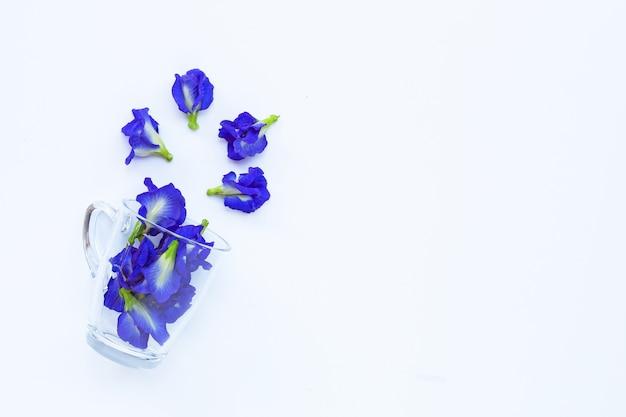 Blue butterfly pea flower in a glass