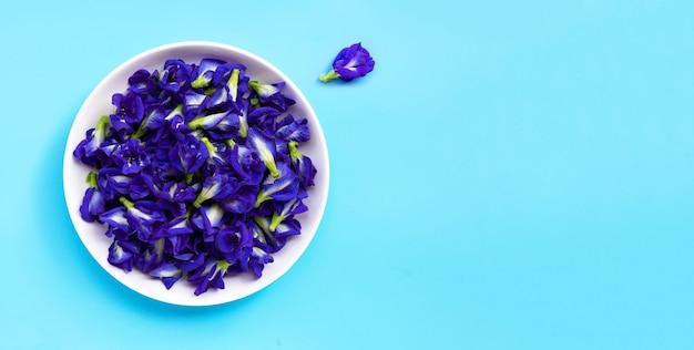 Голубой цветок гороха бабочки на синем фоне.