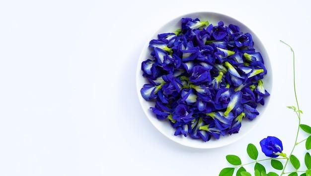 Цветок гороха голубой бабочки на белой предпосылке.