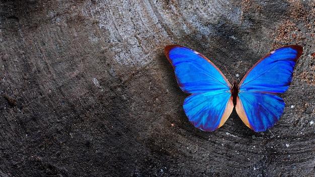 青い蝶は灰色の古い壁に座っています