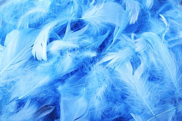 Blue chicken decorative feathers Premium Photo