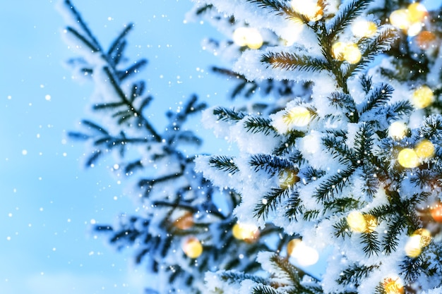 ブルークリスマスの妖精の背景。光と雪のある天然の針葉樹の枝。