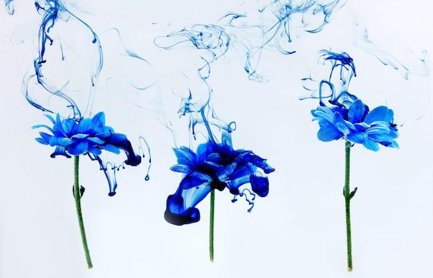 Blue chrysanthemum inside water white background flowers aster under paints indigo smoke steam blur