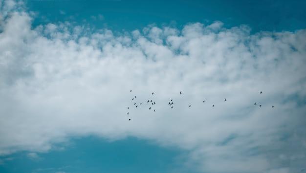 Blue cloudy sky with birds