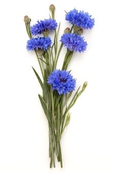 Blue cornflower herb or bachelor button flower bouquet isolated cutout