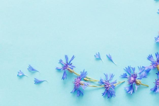 파란 종이에 파란 cornflowers