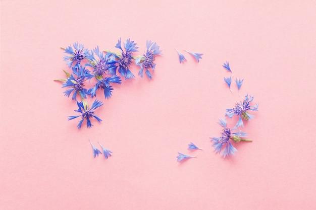 분홍색 종이에 파란 cornflowers
