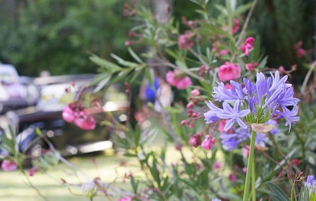 Синие элегантные цветы.