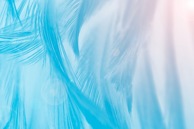 Blue feather texture background with orange light