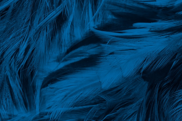Blue feather texture background