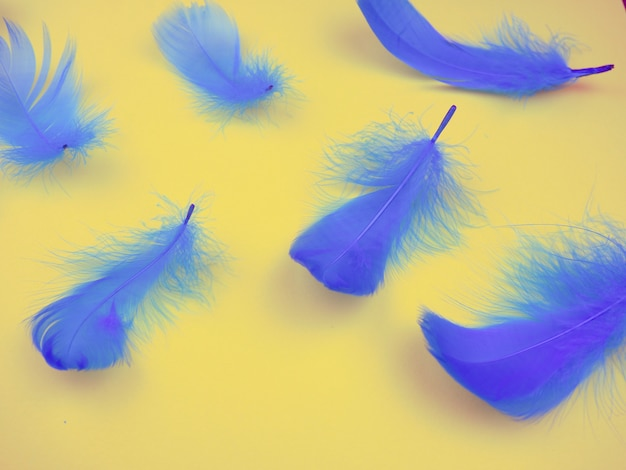 Blue feathers on background, soft, as background, valentine's day.