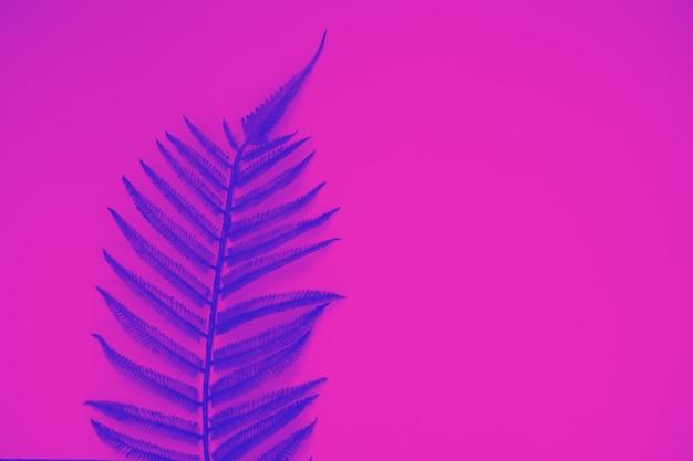 Blue fern exotic leaf against pink background, trendy neon toning