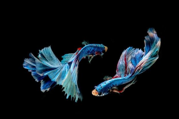 Blue fish isolated on black background