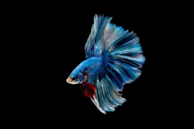 ิ синяя рыба. многоцветная рыба