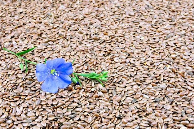茶色のリネンの種子を背景に青い亜麻の花