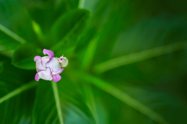 푸른 꽃 흐림 자연
