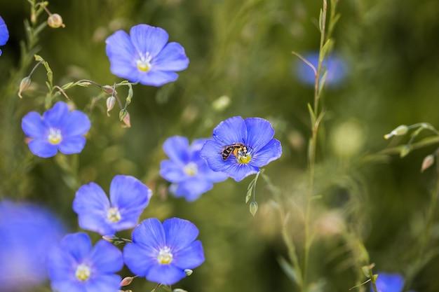 草が茂った背景に亜麻の花の青い花産業亜麻の農業分野