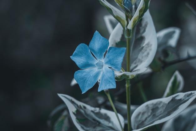 봄 시즌에 정원에서 푸른 꽃 식물