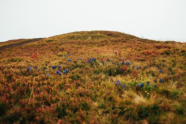Blue flowers grow in the field