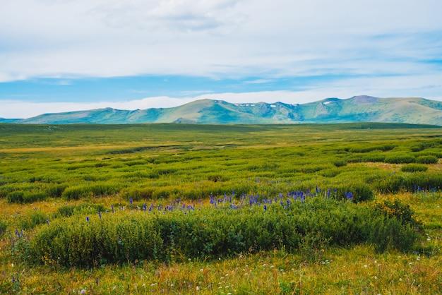 遠くの巨大な山の前の谷の茂みに青い花。