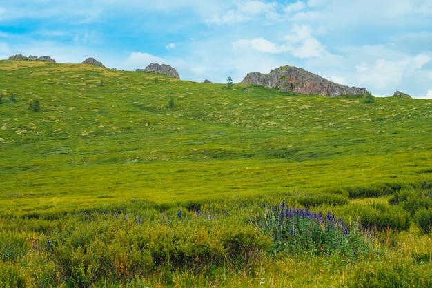 遠くの岩の前に山腹の茂みに青い花