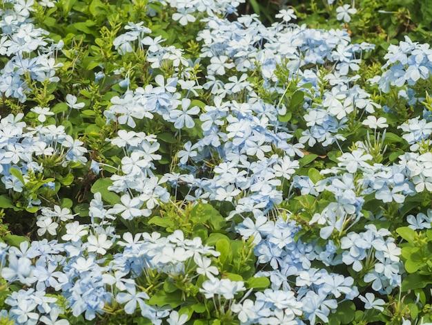 Синие цветы в саду