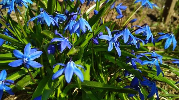 緑豊かな庭園の青い花