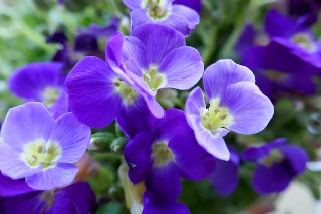 青い花。春の花の背景。緑の葉の青い花