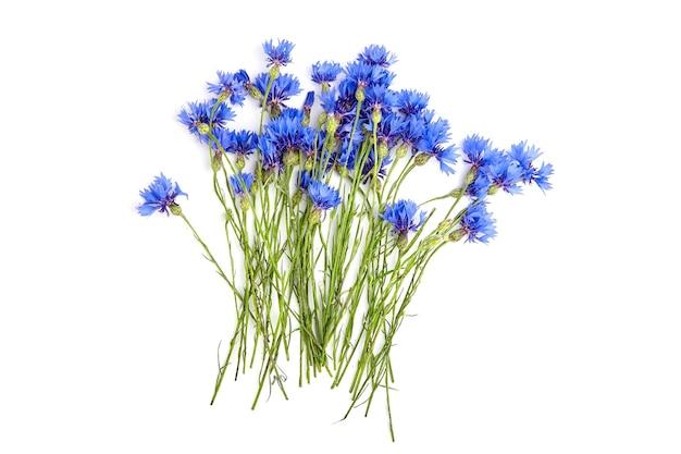 블루 신선한 야생 cornflowers 흰색 절연