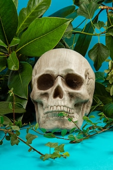 Blue and green background with green fresh leaves and plants and a scull.
