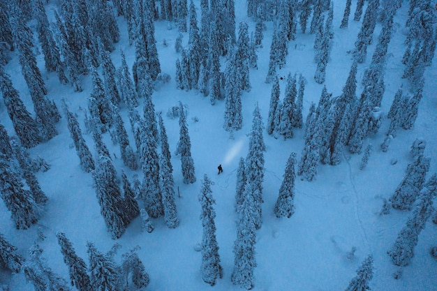フィンランドのリーシトゥントゥリ国立公園でのブルーアワードローンショット