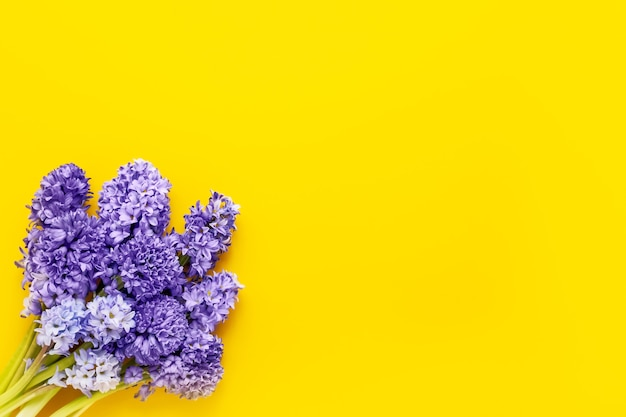 Blue hyacinths bouquets on yellow background mothers day valentines day birthday celebration concept