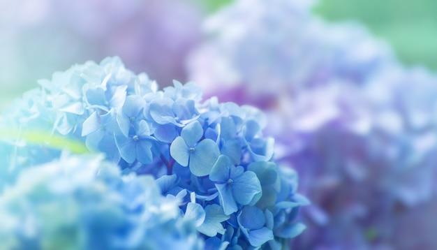 青いアジサイの花をクローズアップ