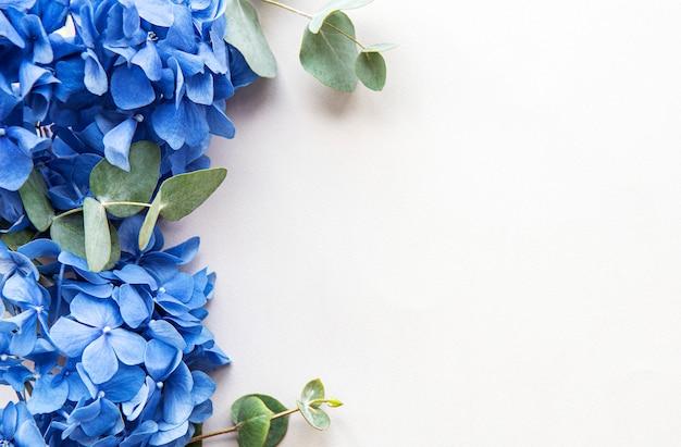 Blue hydrangea flowers on white background copyspace